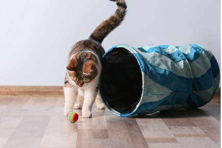 image of cat playing with toy.