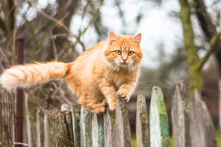 image of cat balancing on a fence.