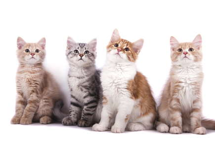 image of four cute kittens.