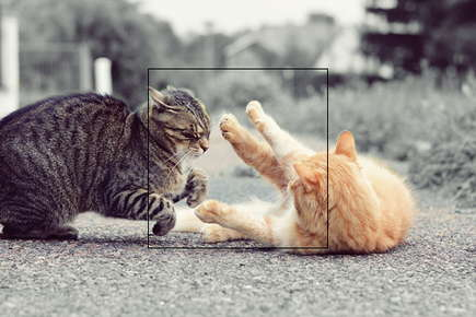 image of cats fighting.