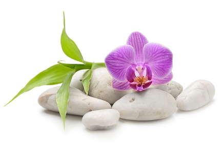 Image of a flower on top of rocks.