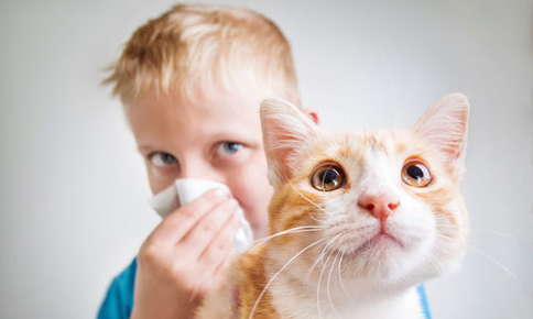 image of a boy holding a cat and sneezing.