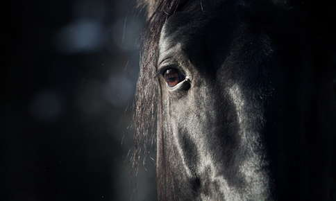 Equine night vision