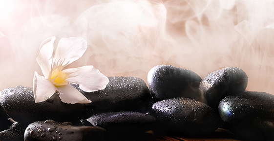 Image of flower on top of hot, steaming rocks.
