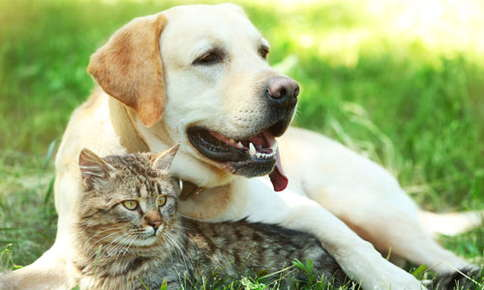 image of a dog and cat.