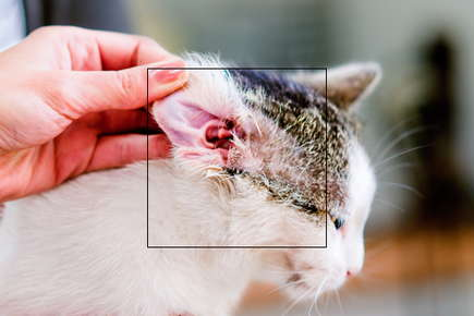 image of a cat's ear.