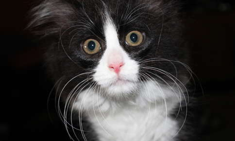 Image of a black and white cat.