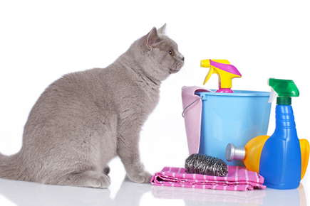 image of a cat with cleaning products.