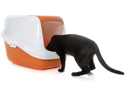 image of a cat and litter box.