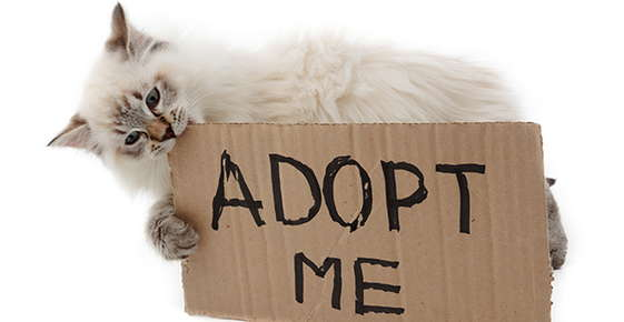 Image of a kitten chewing on an Adopt Me sign.