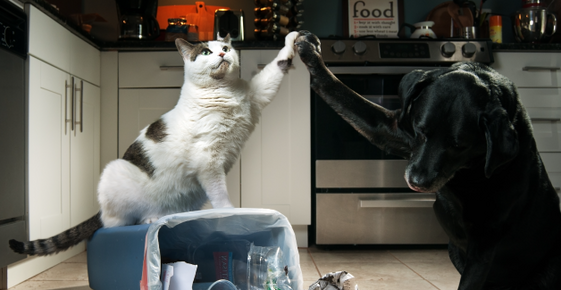 Image of a dog and cat celebrating after knocking over the kitchen garbage.