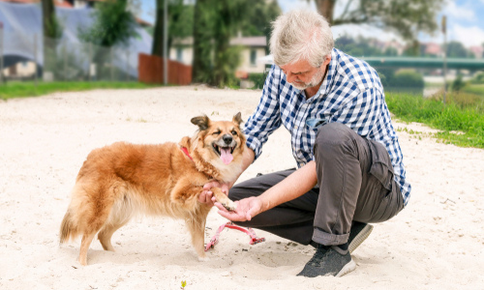 Owner checking dog's paw on the beach