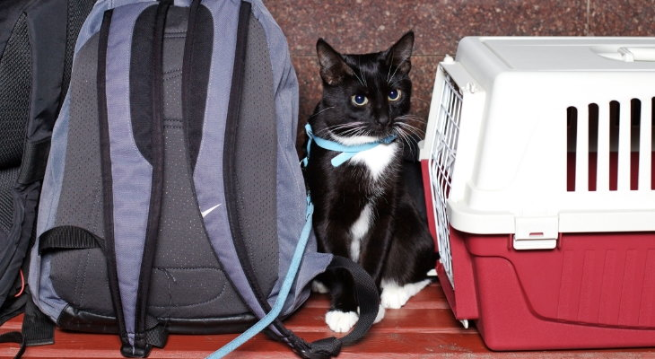 cat waiting by carrier
