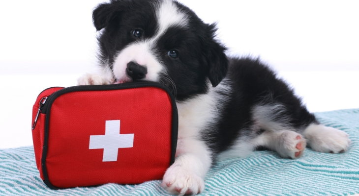 dog with first aid bag