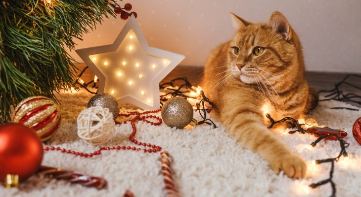 cat with holiday decorations
