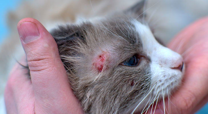 cat with infection