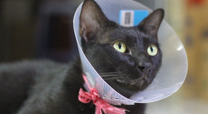 cat with cone on head