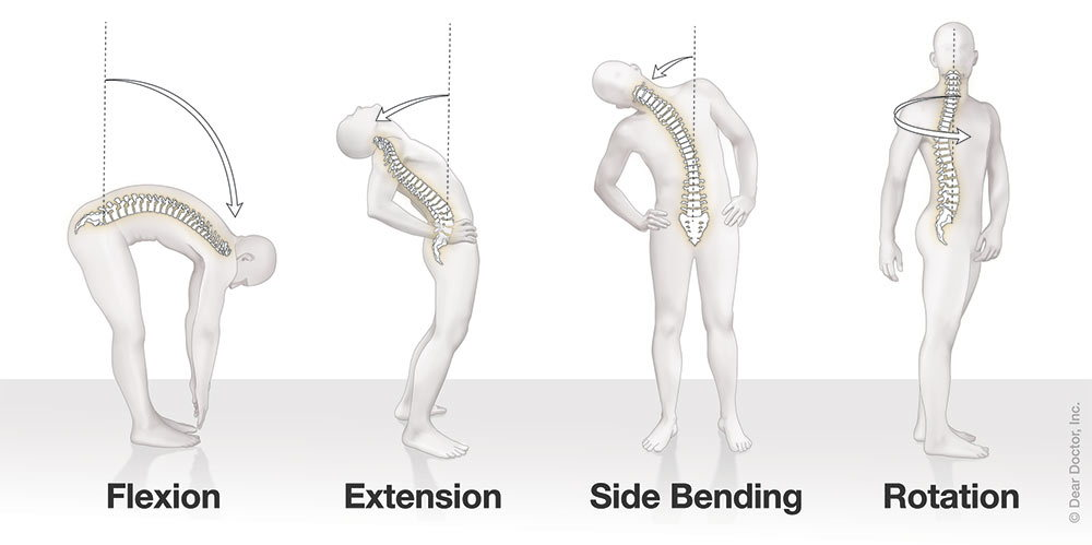 How spine moves