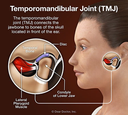 Temporomandibular joint (TMJ).