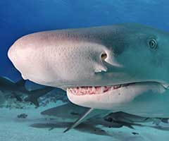 Sharks have unlimited sets of teeth