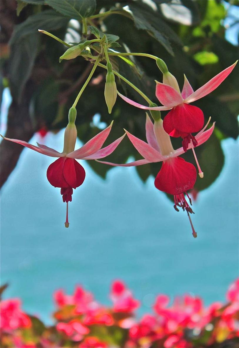 cherry drop flowers