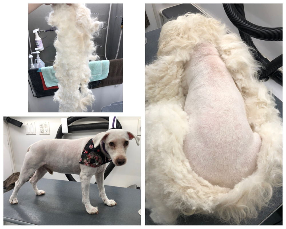 perfect dog grooming