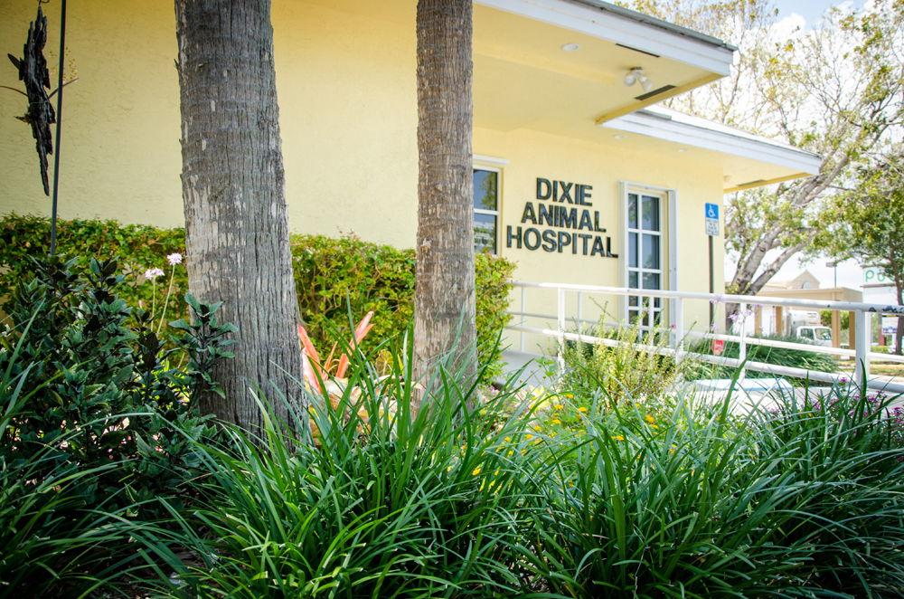 Dixie_Animal_Hospital_Garden_1