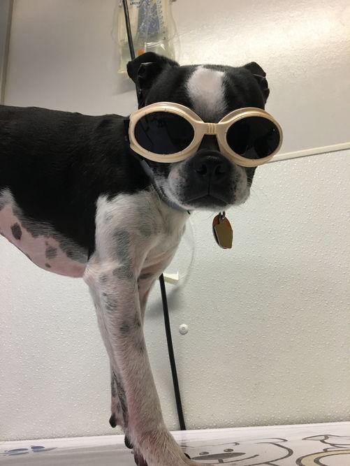 doggoggles
