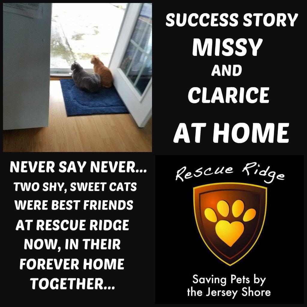 Missy Clarice