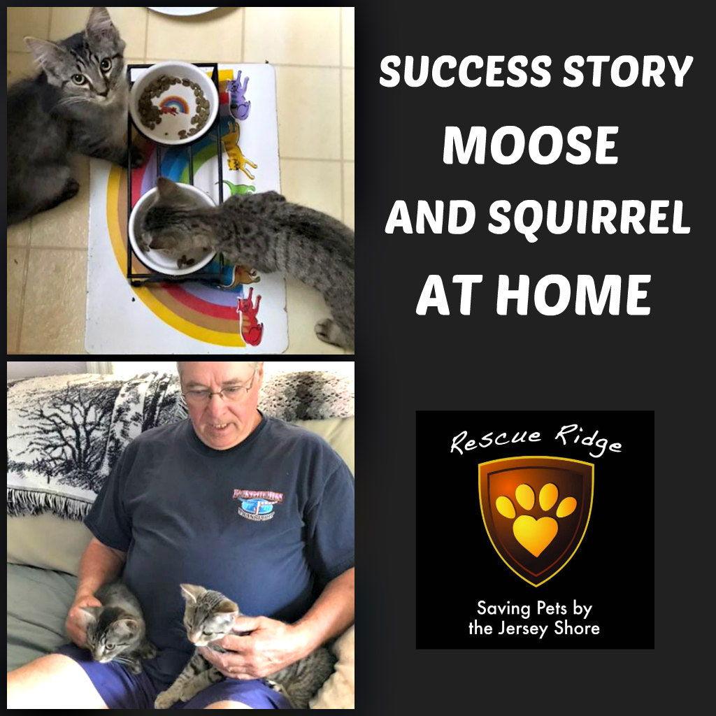 Moose Squirrel