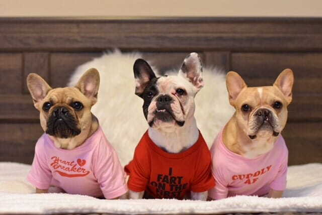 Fun Staff Pet Photos