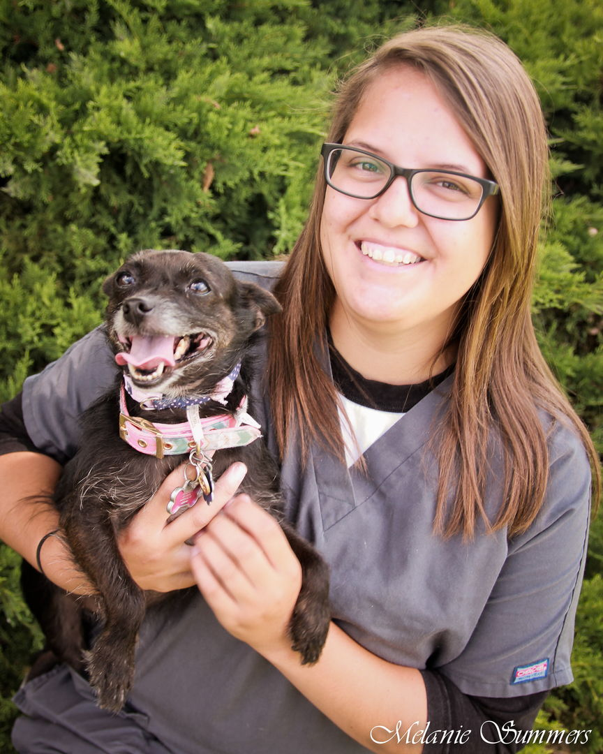 Sarah Ariens, Animal Hospitality