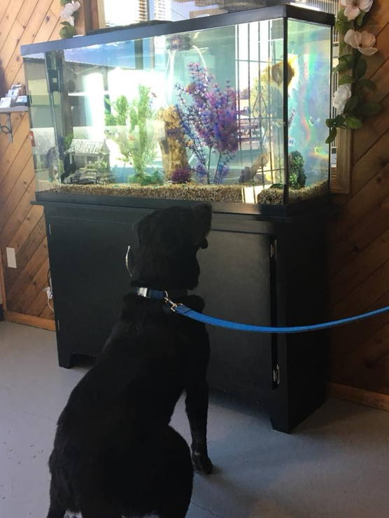Doggy and Fish