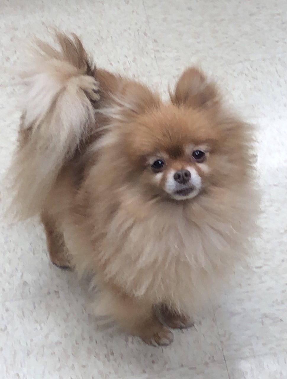 Sammie's dog, Chip