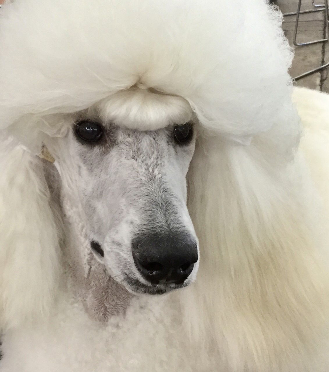 Jennifer's Dog, Dylan