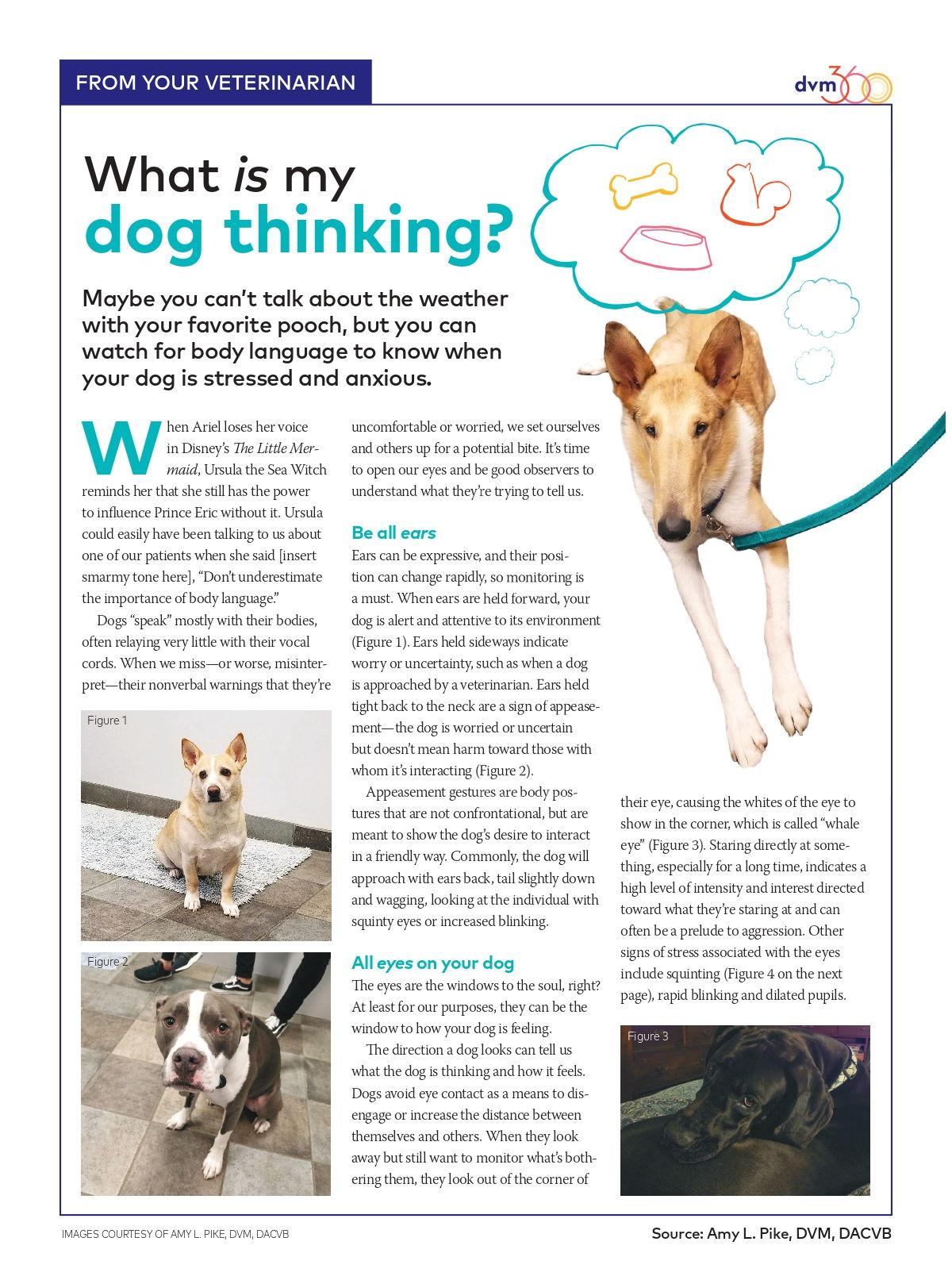 Dog Thinking