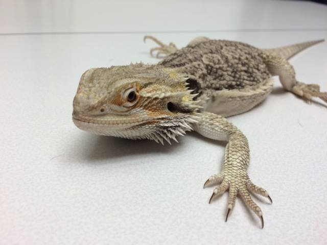 Exotic Pet Care