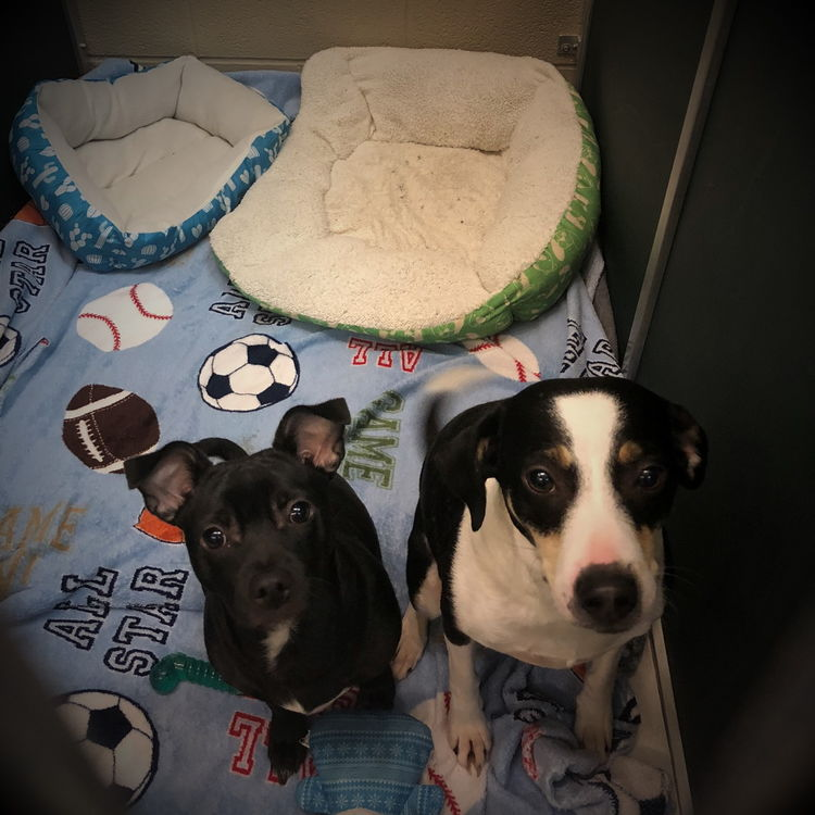 2 Dogs Sharing a Kennel