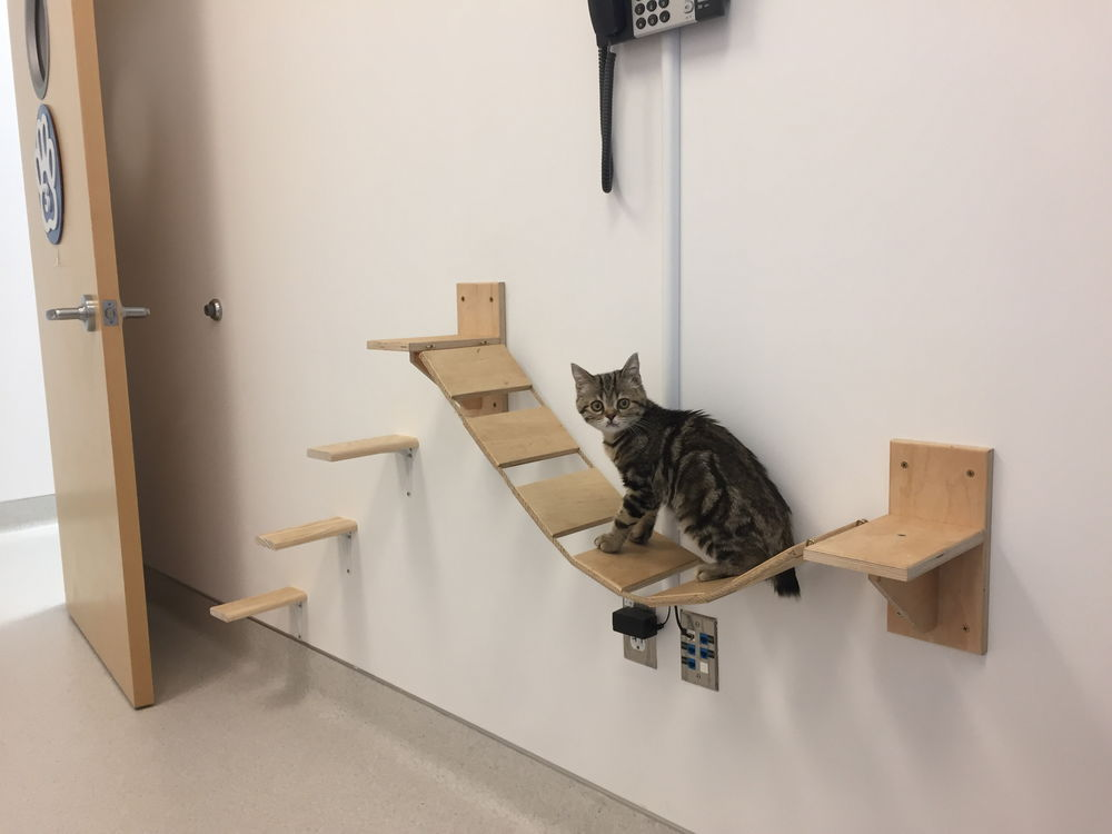 Our Cat Gym