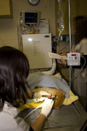 Lauren in surgery