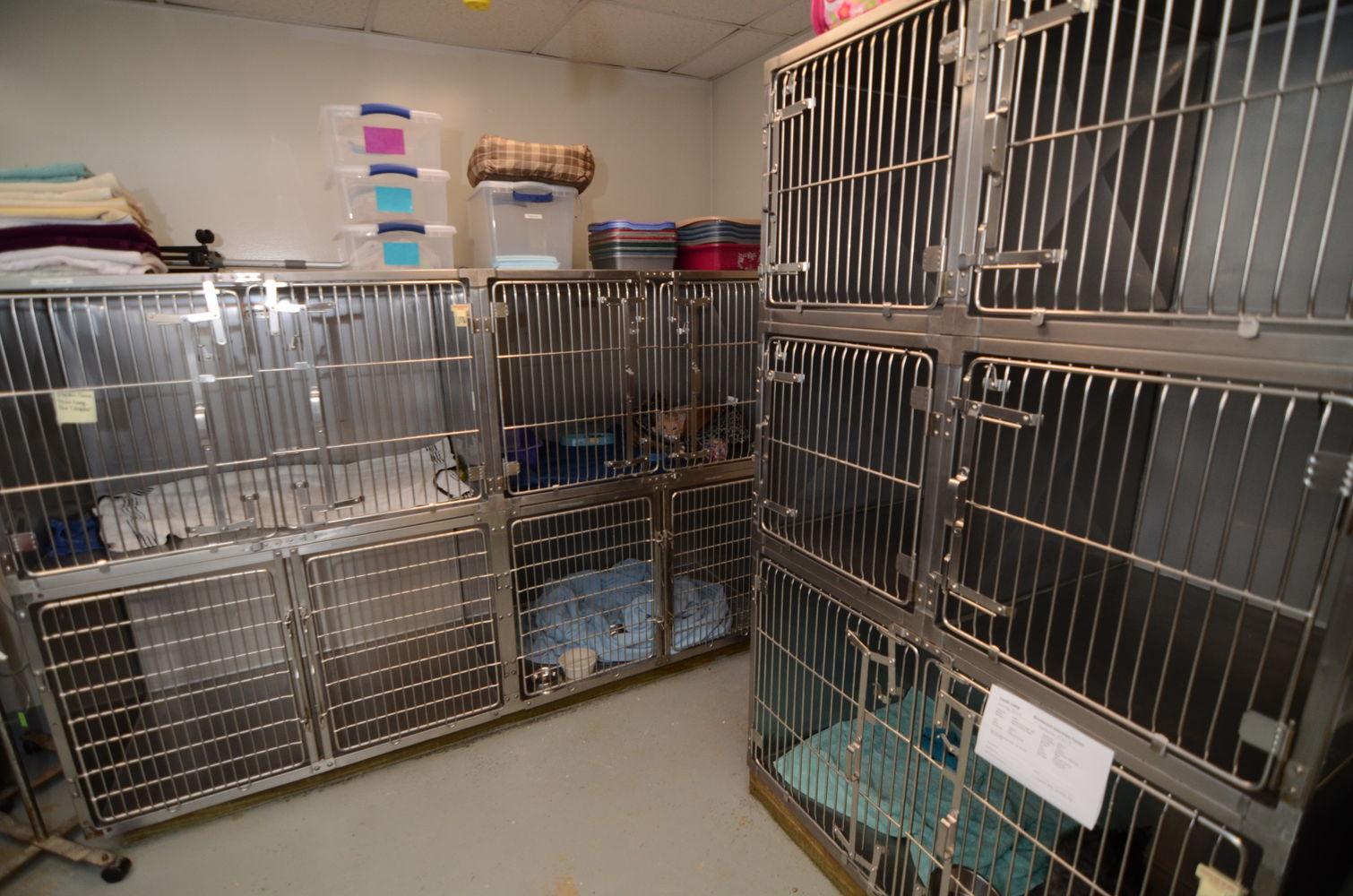 Cat Boarding Room/Hospitalization Ward