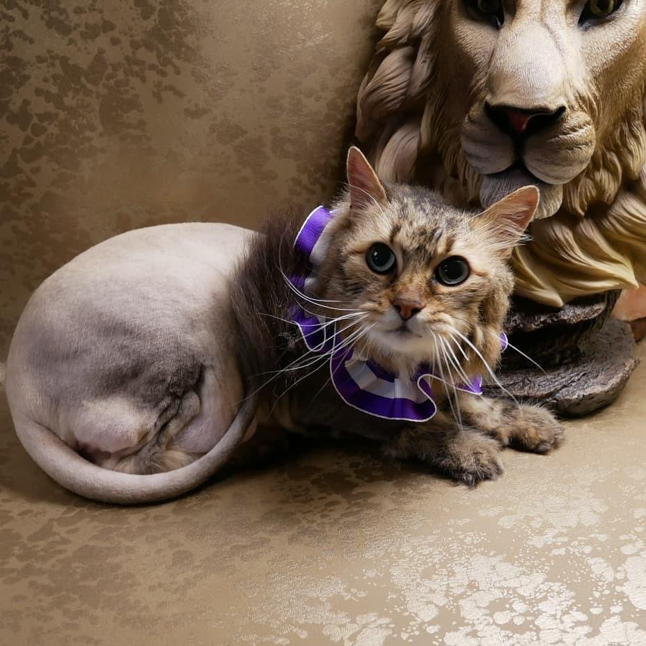 Lion cut!