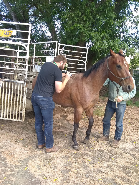 sev horse