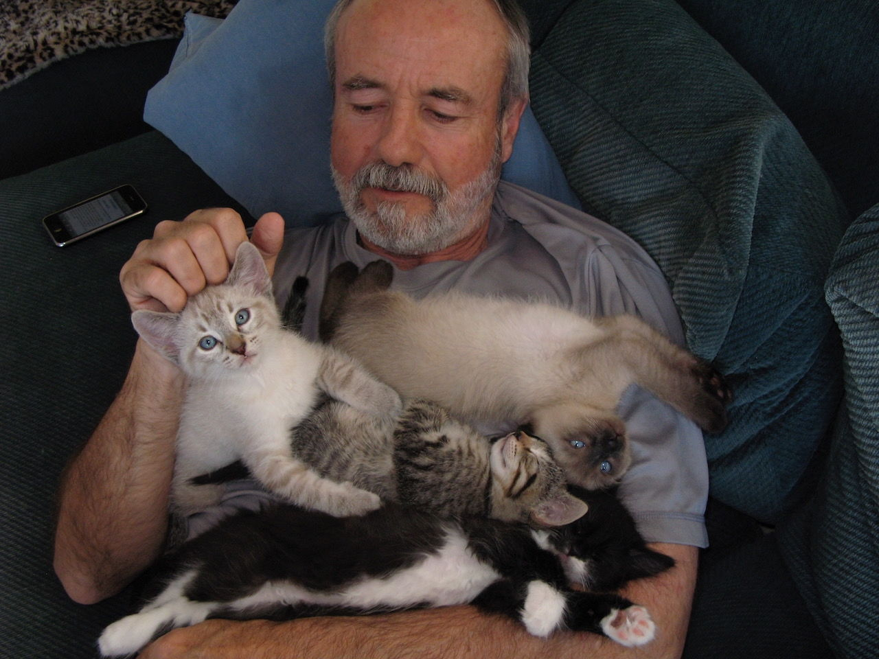 kittens laying on owner