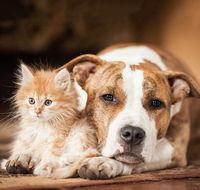 Image of dog and kitten next to each other
