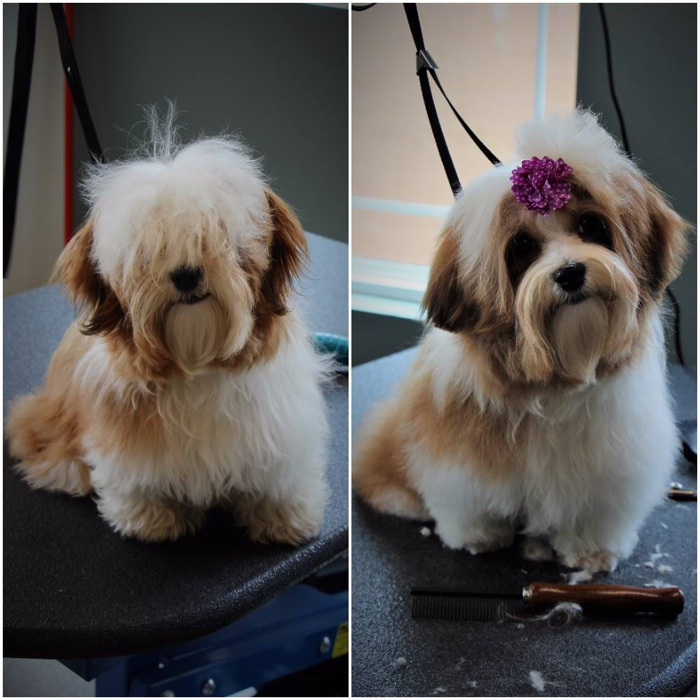 Before and After Groom