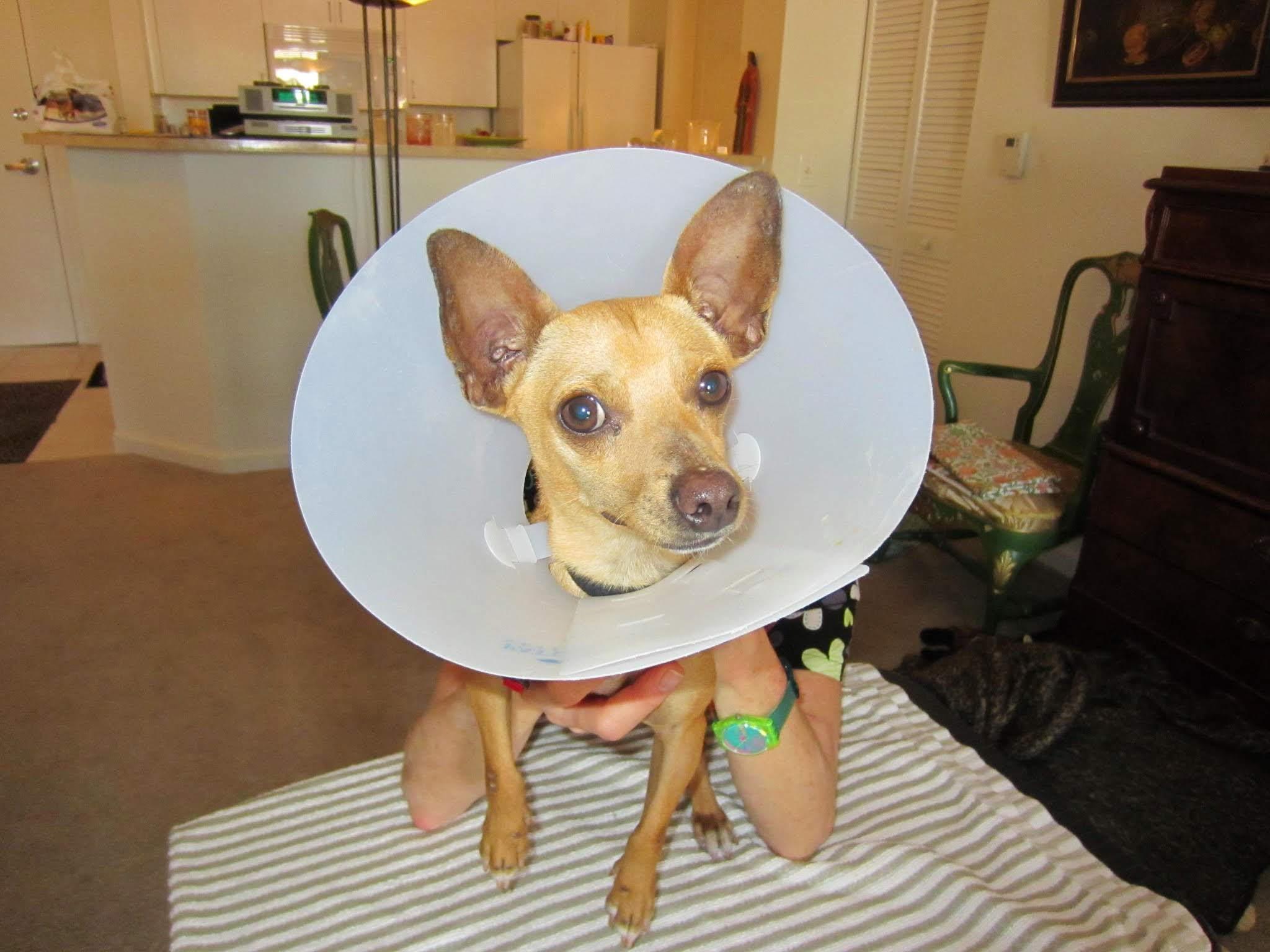 Cone of Shame!