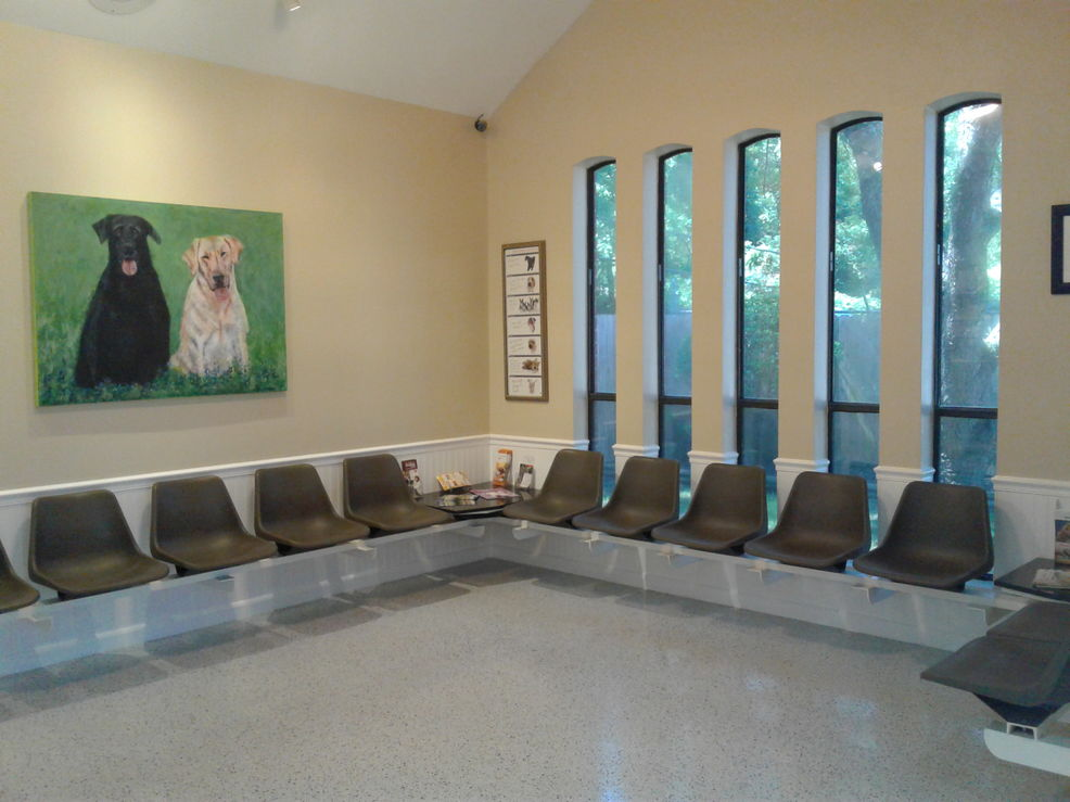dog lobby