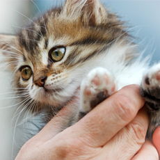 A closeup of a kitten held in a hand