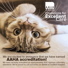AAHA Accredited for your best friend!